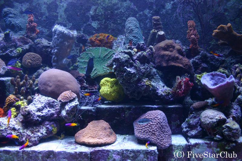 H.アトランティス・パラダイス・アイランドホテル内の水族館