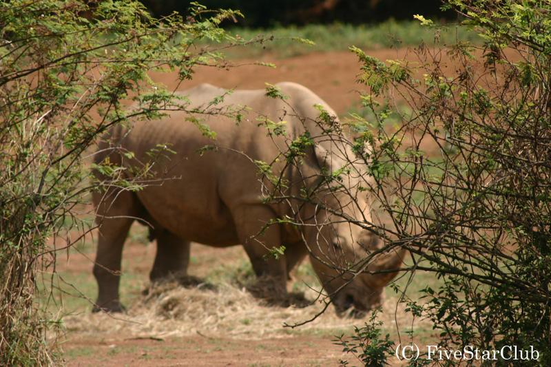 ウガンダには多くの動物が棲息している