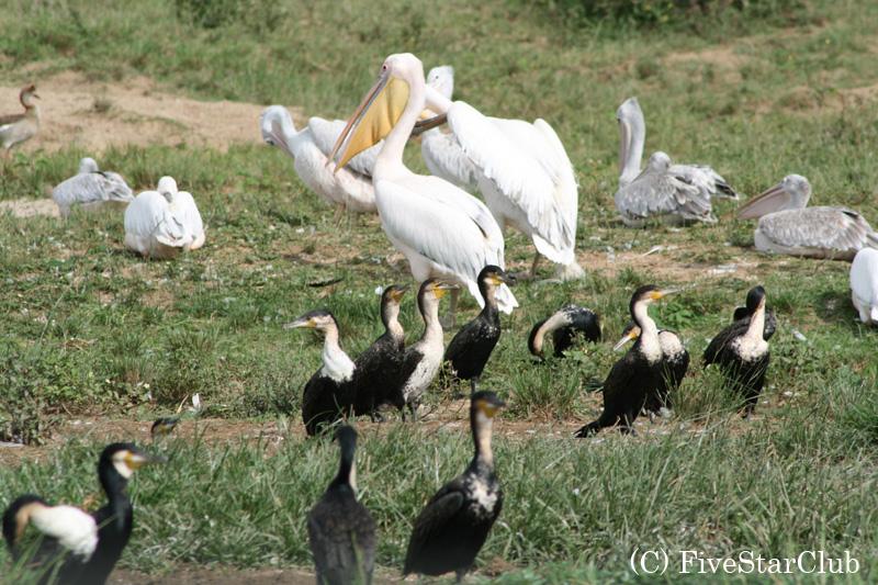ウガンダは鳥たちの楽園
