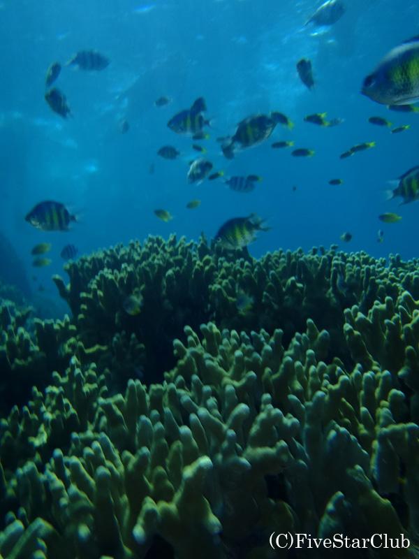 パラオの海でシュノーケリング