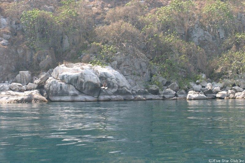 マラウィ湖は水が透明で 魚が多い