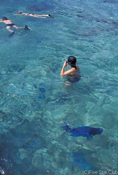 アルバの海