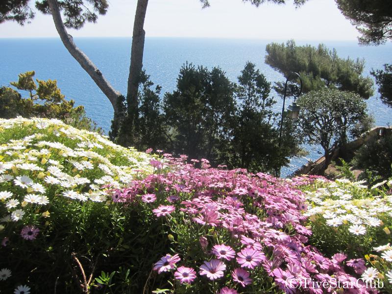 花が咲き乱れる散歩道