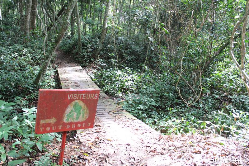 レジオ・ルーナ・ゴリラ保護区/森の中を歩く