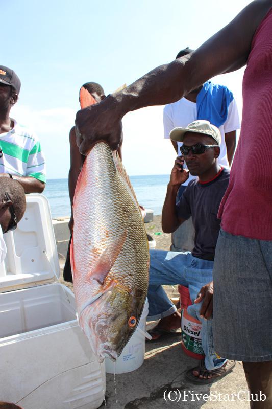 バセテール港の魚屋さん