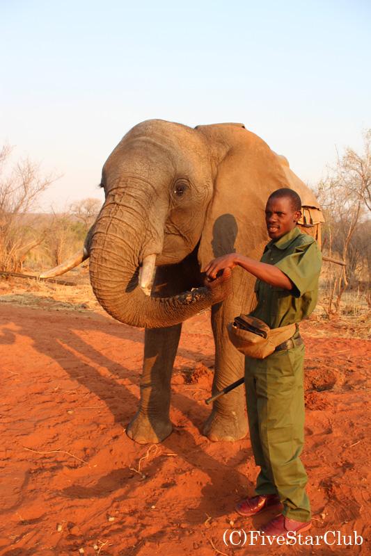 ゾウさんとの触れ合い