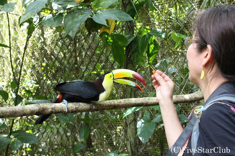 ベリーズ動物園/トゥーカンに餌付け
