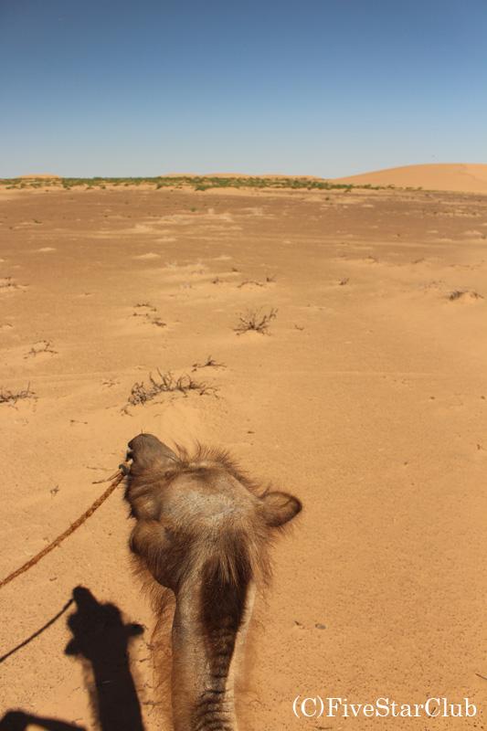 ラクダからの眺望