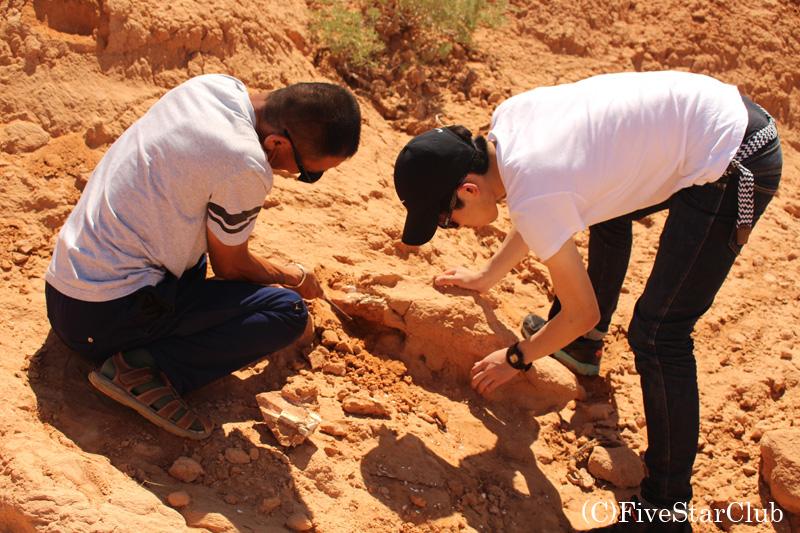 ドライバーさんと化石の発掘