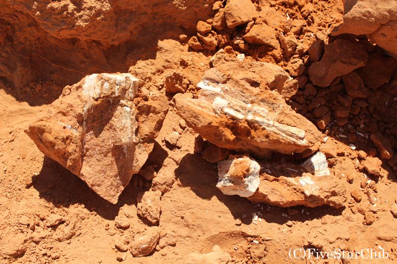 発見された何かの化石
