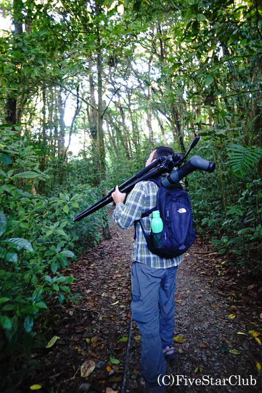 熱帯雲霧林 モンテベルデ自然保護区のトレイル