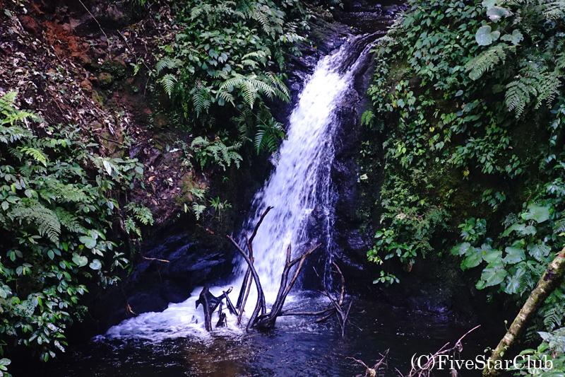 熱帯雲霧林 モンテベルデ自然保護区のトレイル 滝