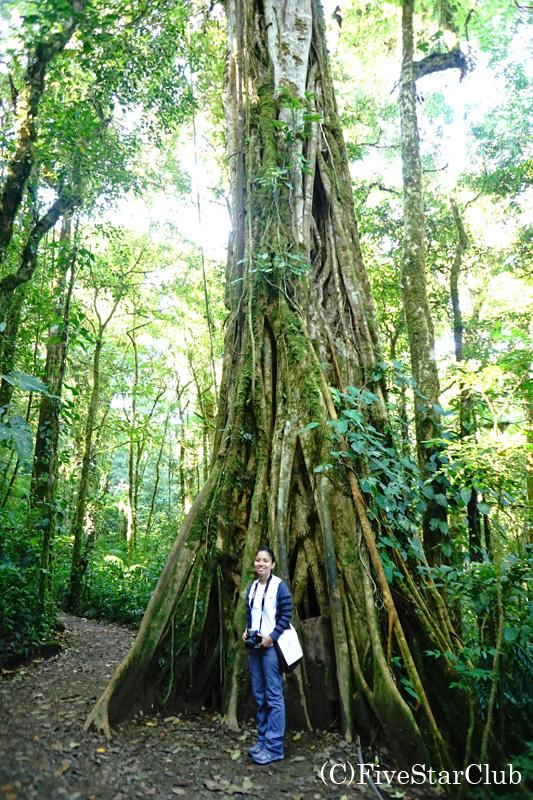 数百年かけて空洞となった大木