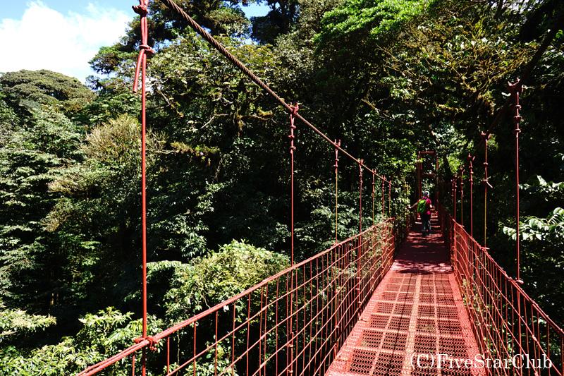 モンテベルデ自然保護区内の吊り橋