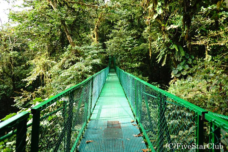8つの吊り橋を渡るスカイウォークツアー