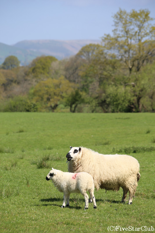 ウェールズの風景