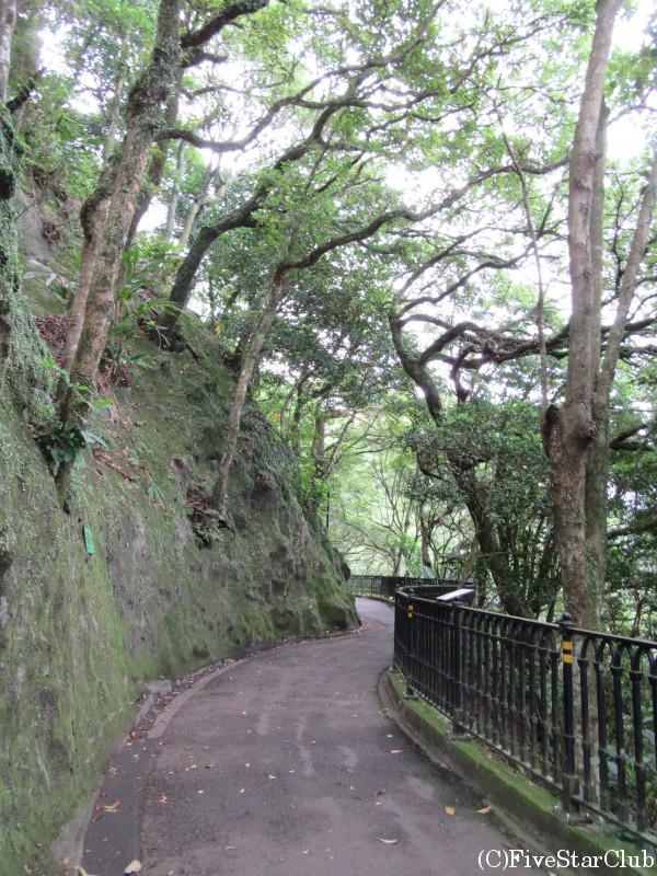 山頂散策路(Laguard Rd)を歩く