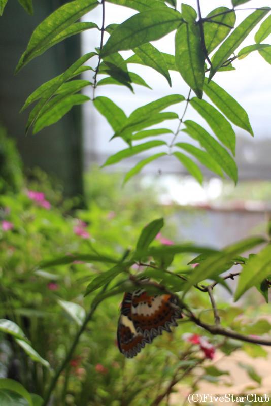 バラフライ・ガーデン/パラワンに生息する蝶