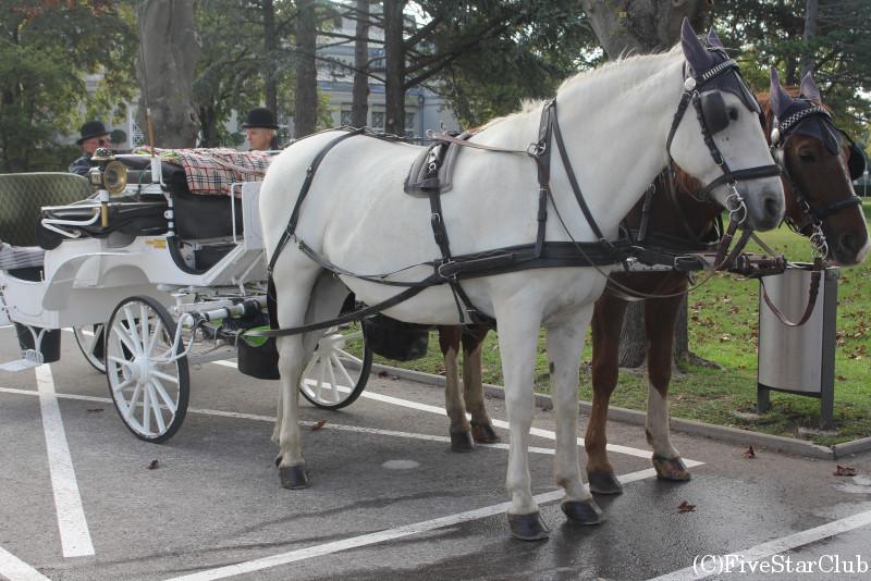 中央墓地はフィアカー(二頭立て馬車)で回るのがベスト