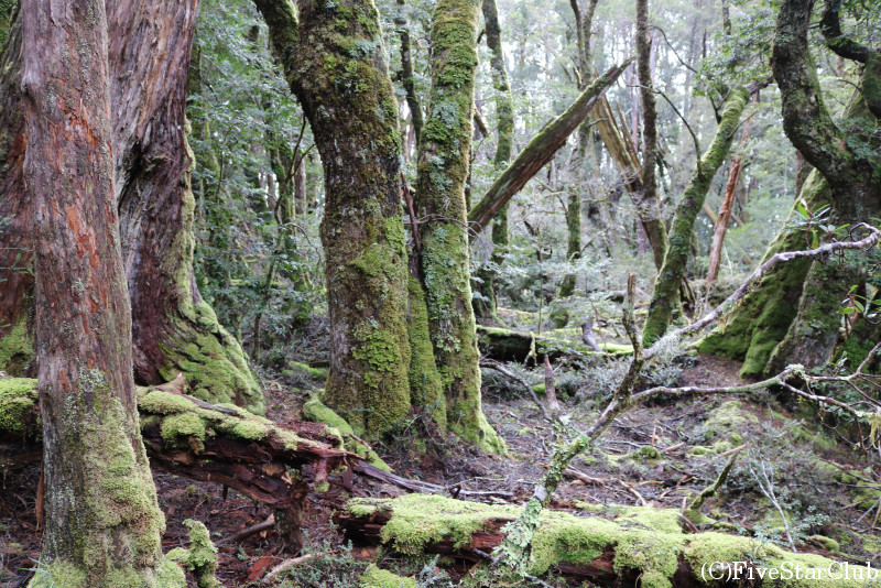 幻想的なタスマニア原生林を歩く