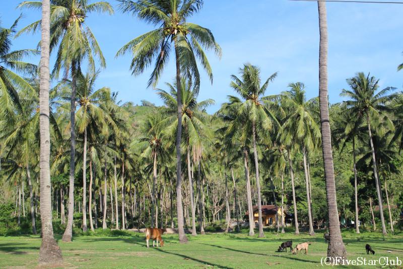 ロンボク島はヤシの木がいっぱい