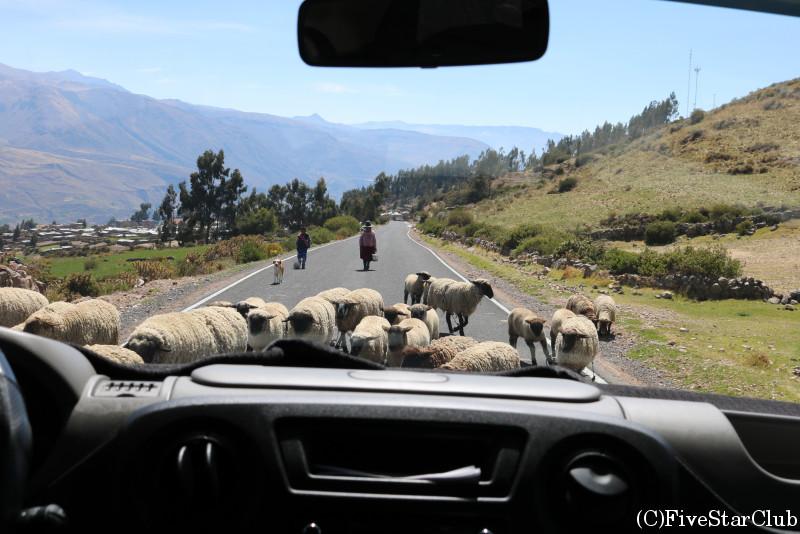 羊が道をふさぐことも