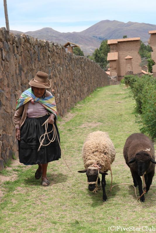 羊の世話をする婦人