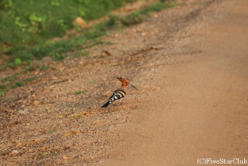 ジープサファリ 200種を越える鳥が住む