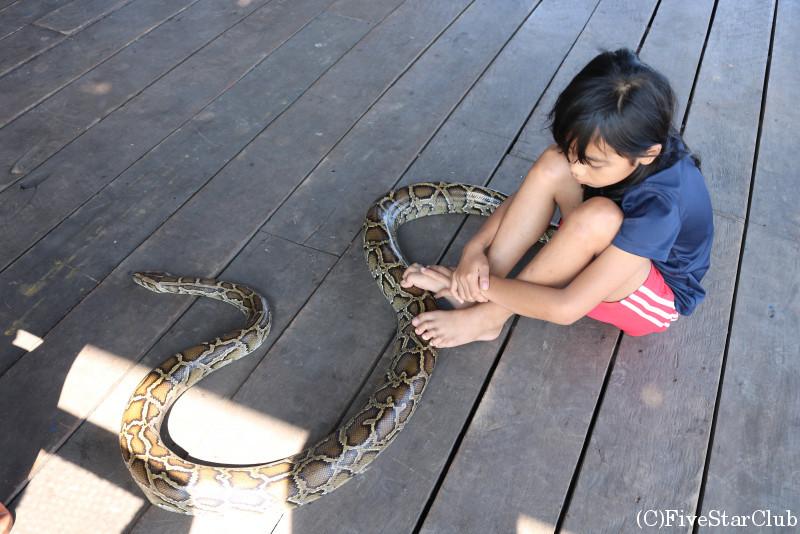 トンレサップ湖 休憩所で働く人の子供とニシキヘビ