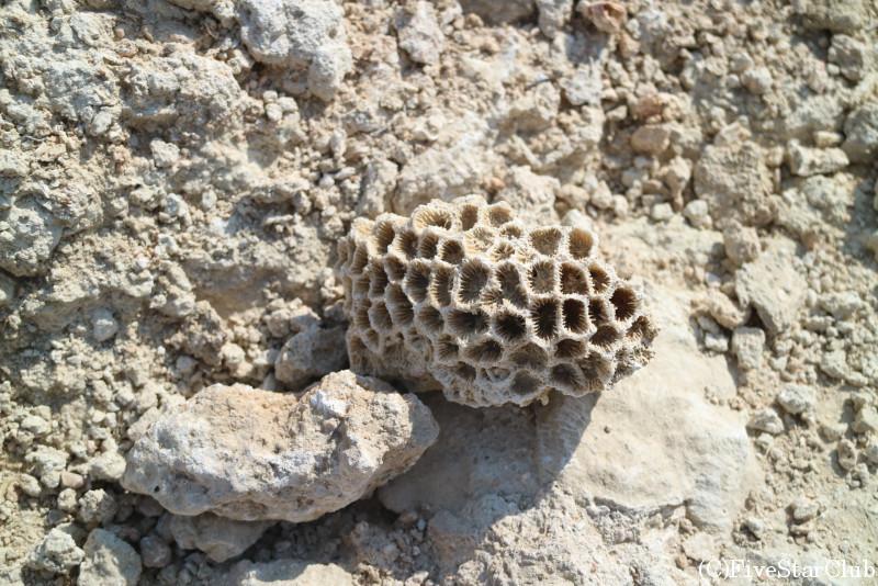 奇岩群を展望できるジオサイト「バシラ」