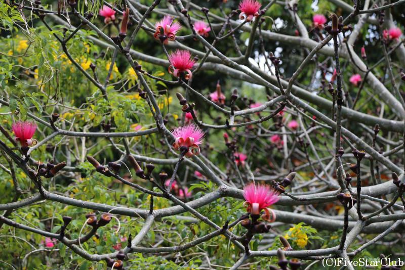バラタ植物園