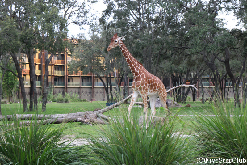Disney's Animal Kingdom キダニビレッジ