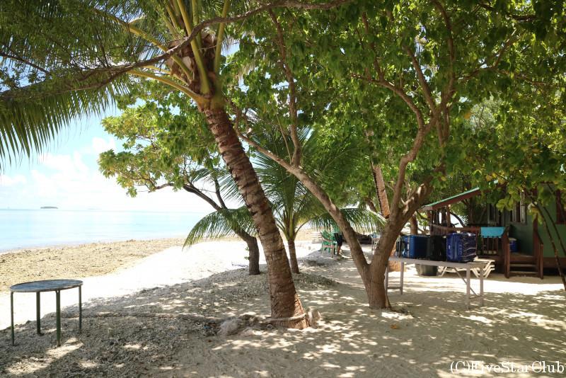 フェノム島はヤシの木がたくさん