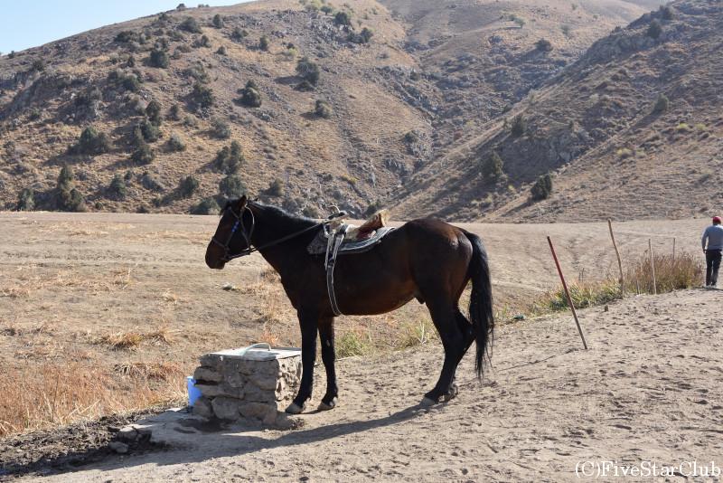 チムガン高地 標高約2200m 乗馬体験もできる