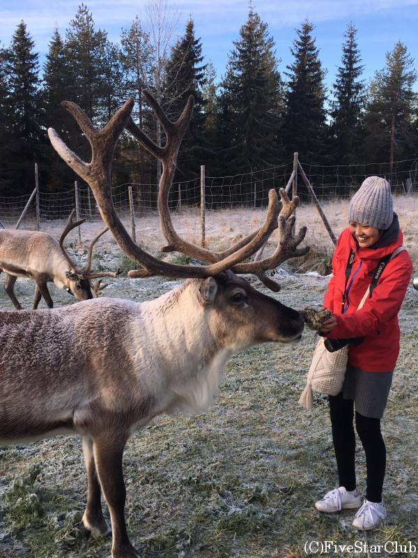 Palosaari Reindeer farm/トナカイと一緒に!