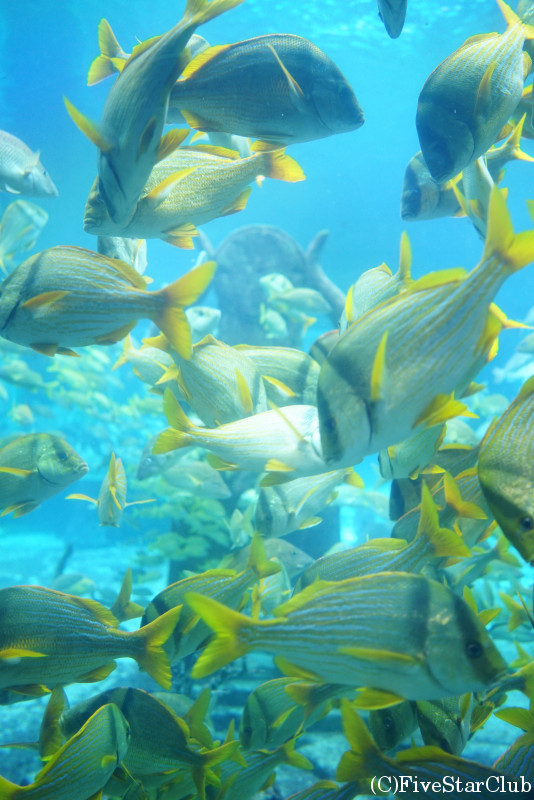 アトランティス ATLANTIS 水族館「ザ・ディグ」
