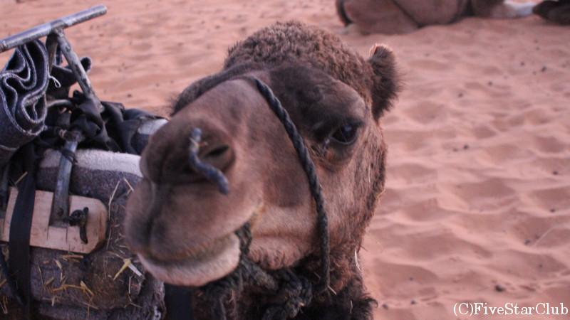 ラクダに乗って初日の出を見に行きました