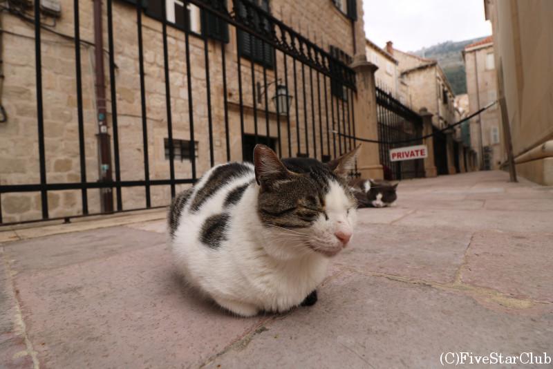 セルビア正教会の猫