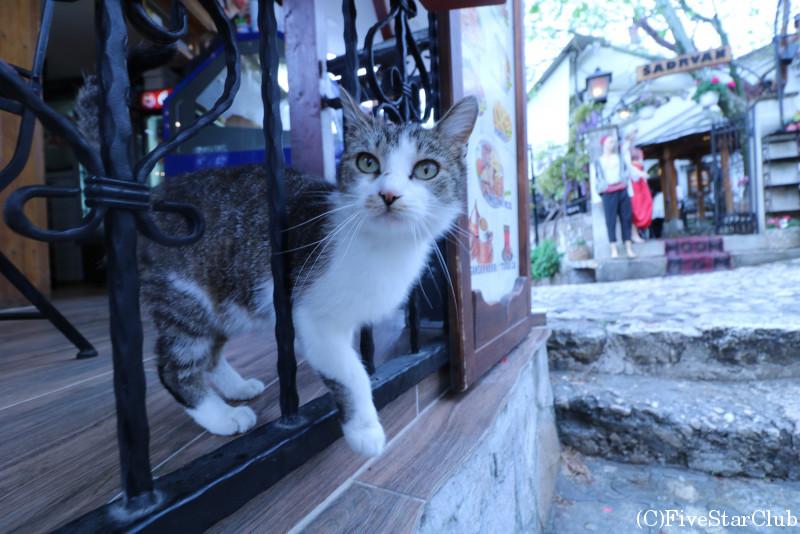 モスタールの猫