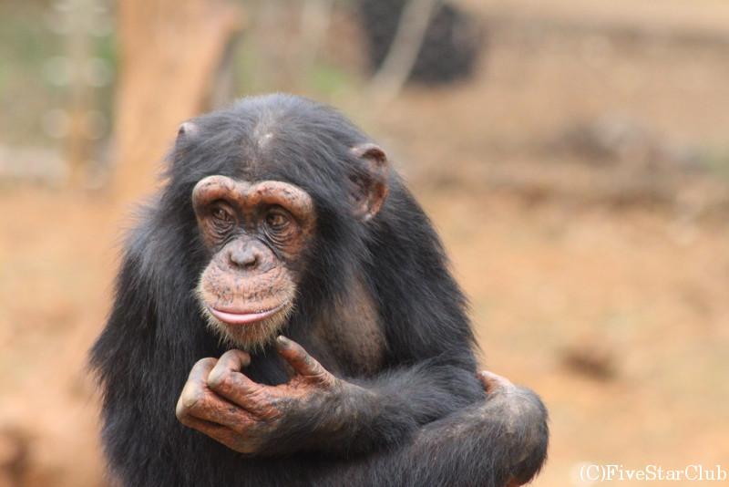 カクマガ・チンパンジー保護区