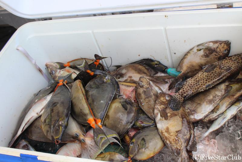 ガソリンスタンドに置かれたクーラーボックスから魚を買う