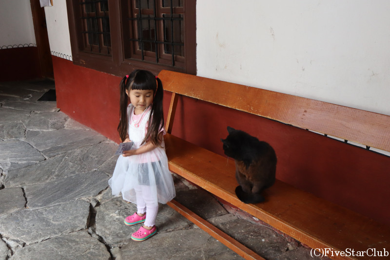 リラの僧院の猫ちゃんと