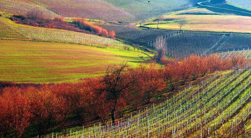 ルケワインのぶどう畑