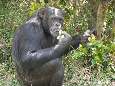 チンパンジーの保護区(オルペジャタ動物保護区)