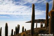 ウユニ塩湖にある「魚の島」