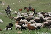 アルティン・アラシャンの草原風景