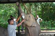 ピナワラ象の孤児院
