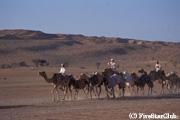 ワヒバ砂漠 (スール)