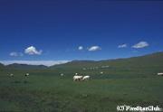 ブルド周辺の大草原