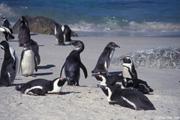 いつも可愛い姿を見せてくれるペンギンたち
